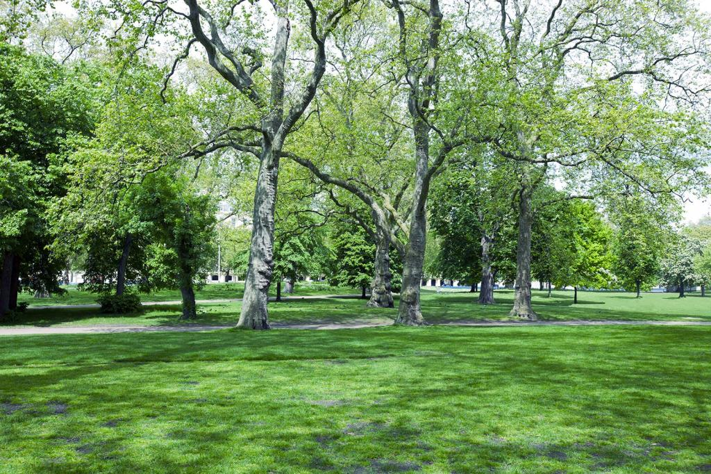 Learn more about the role of and pressures on our green spaces under climate change